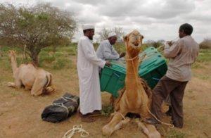 phoca_thumb_l_knls camel library  1.3