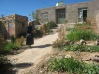 فضای سبزی که اعضای کتابخانه در حیاط آن ساخته اند